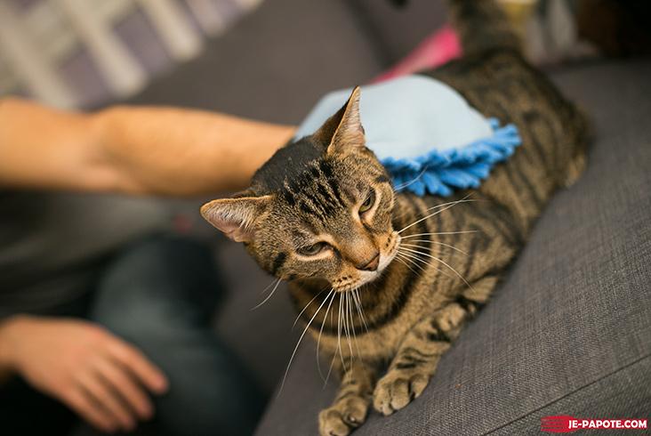 Gant de séchage pour chat Miaoubox