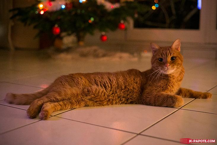 Pilou, chat roux