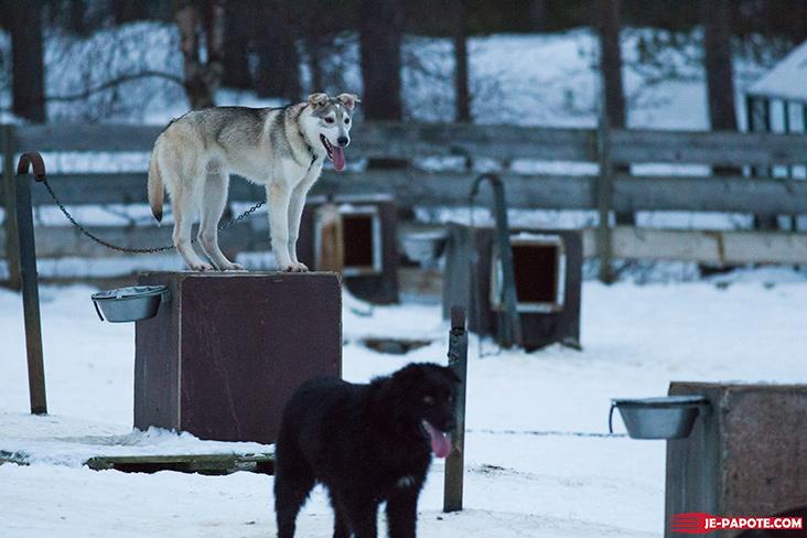 huskies-karasjok