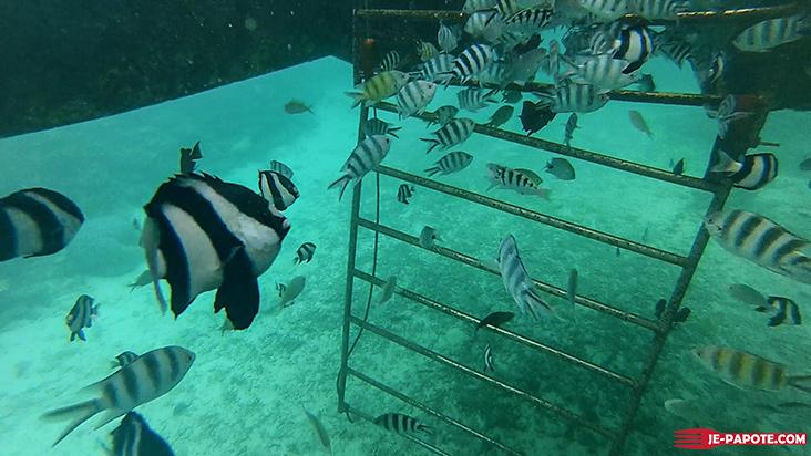 descente marche sous l'eau