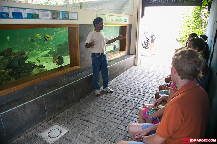 aquarium-ile-maurice-dejeuner