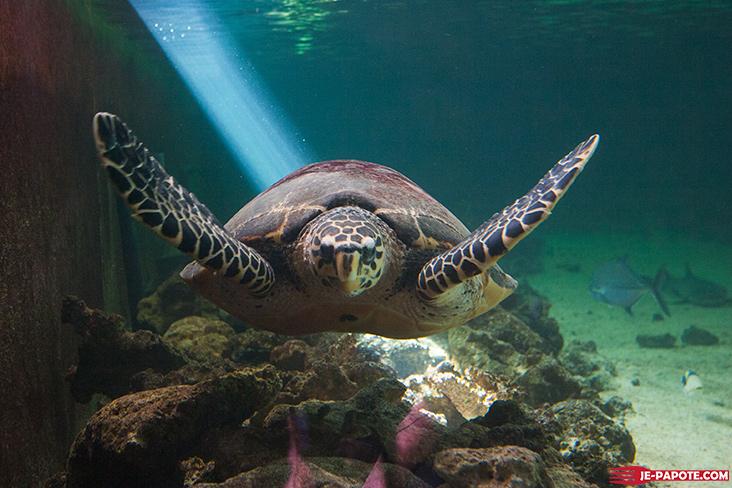 aquarium de l ile maurice 224 pointe aux piments je papote