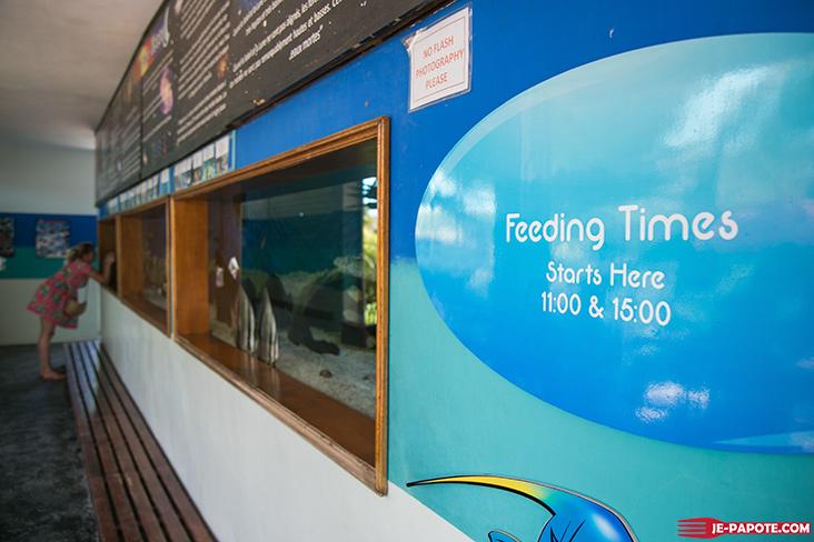 aquarium-ile-maurice