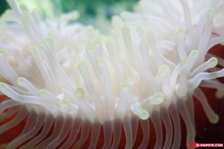 faune-aquarium-ile-maurice