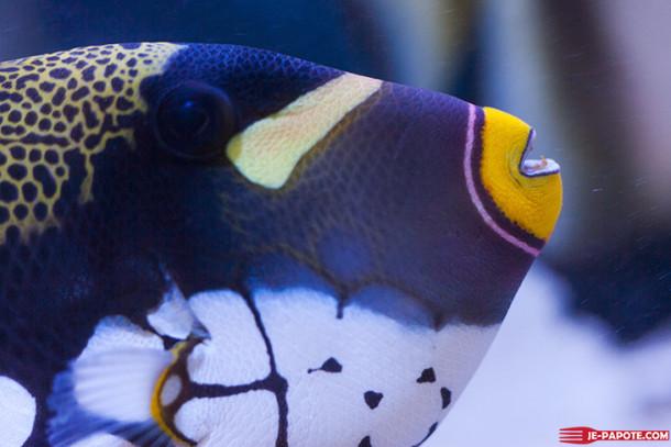 Visiter l'aquarium de l'Ile Maurice