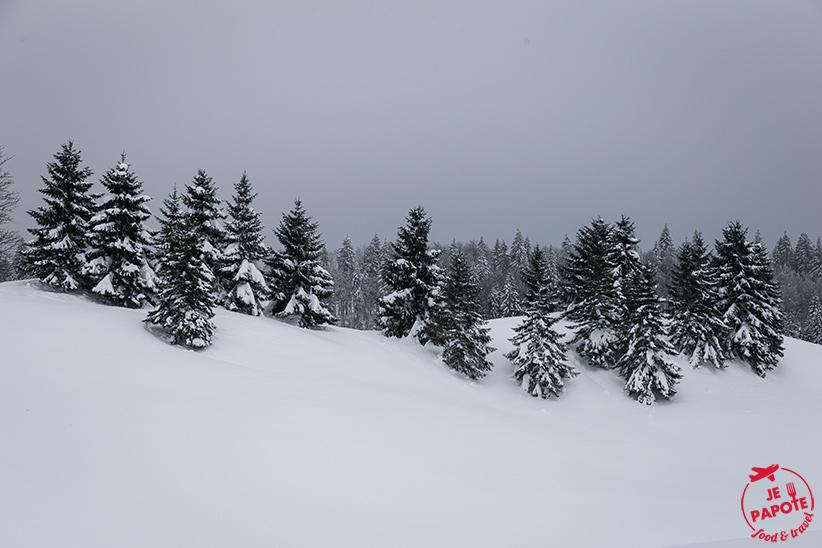 sapins-neige-jura