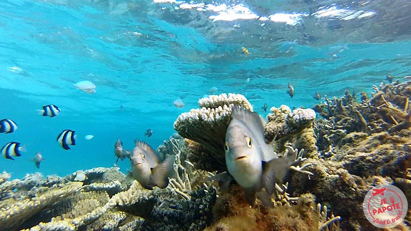 fond-marin-ile-maurice
