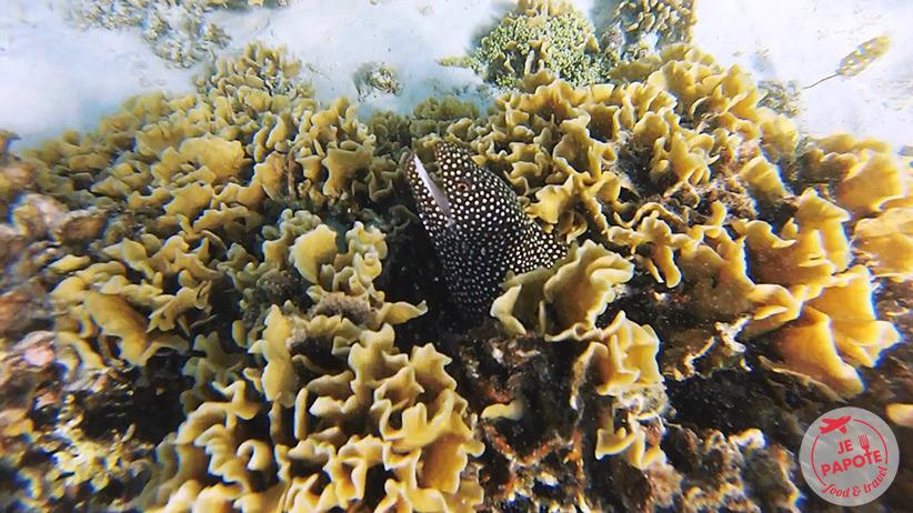 snorkeling-murene-ile-maurice