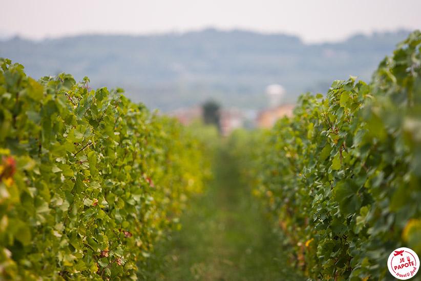 Vigne Italie du nord