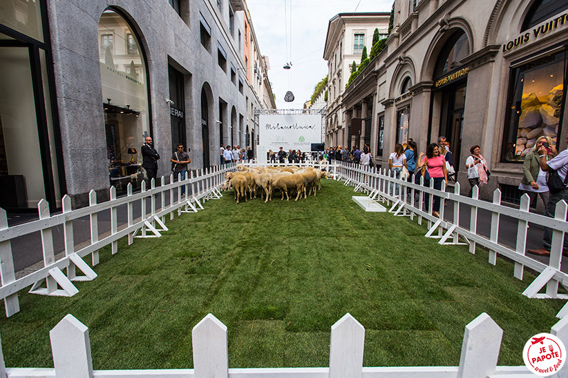 Wool week Milan