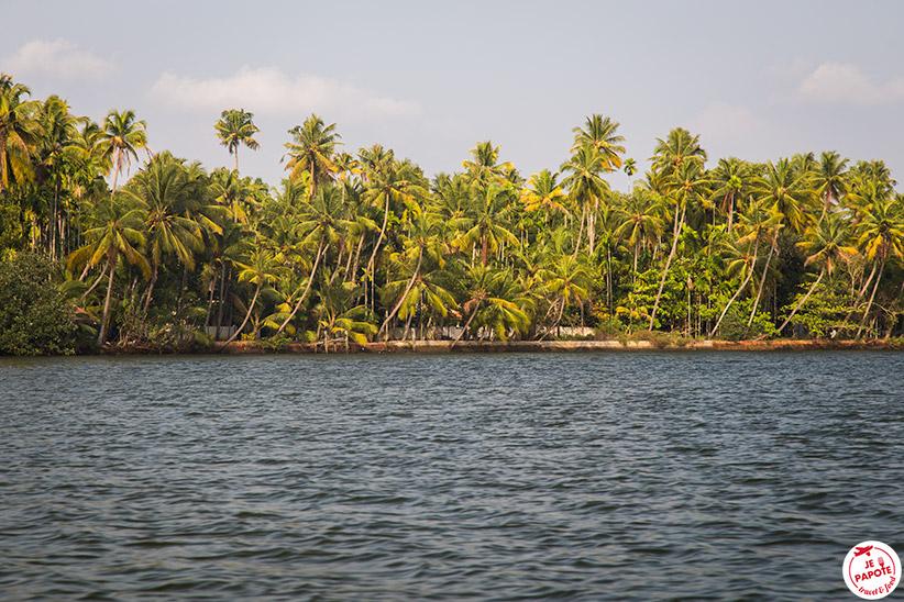 Cocotiers Kerala