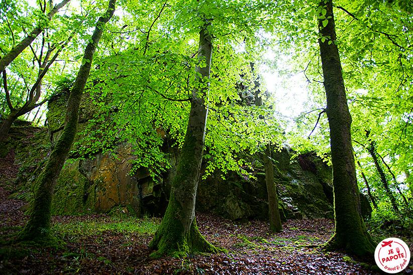 forêt de Mortain