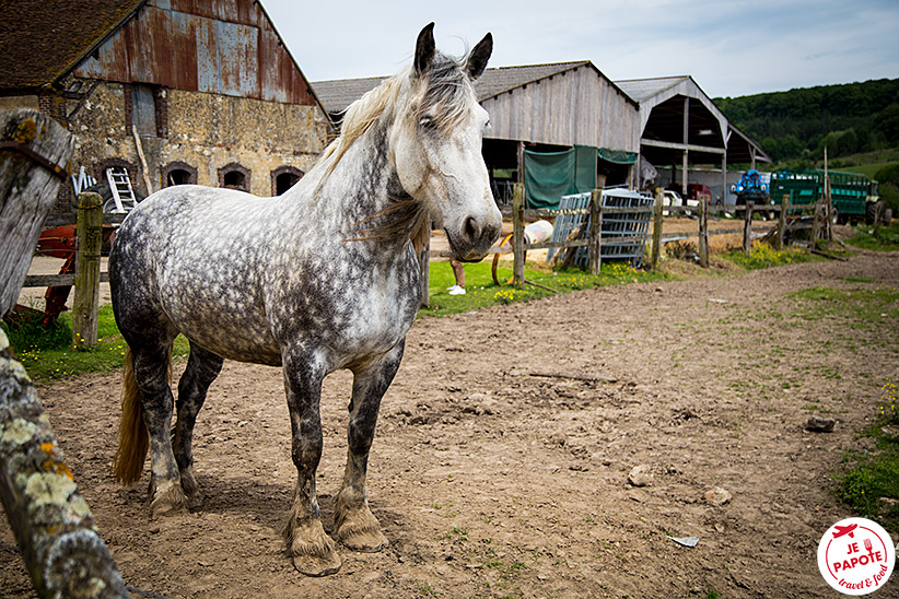 percheron