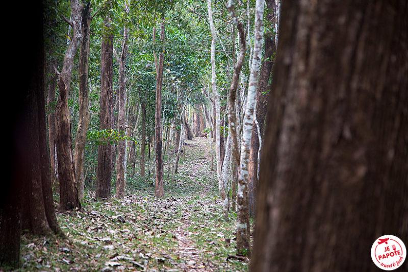 Periyar Reserve de tigres