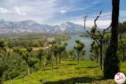 15 choses à faire et à voir au Kerala