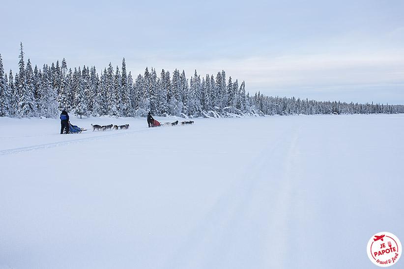 Chien de traineau Laponie