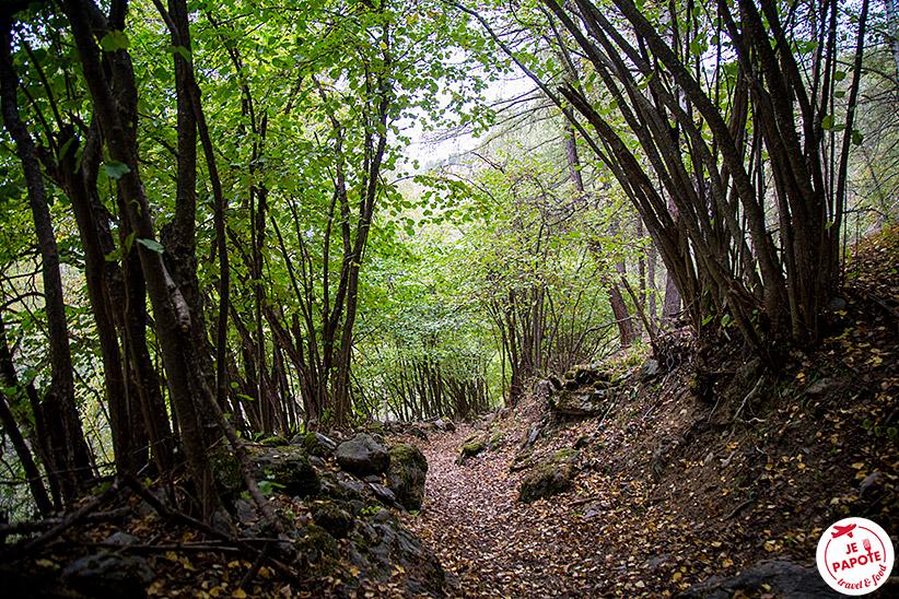 Chemin de forêt Suisse
