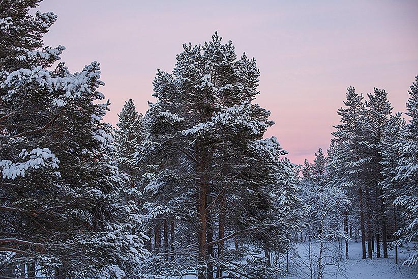 novembre Laponie
