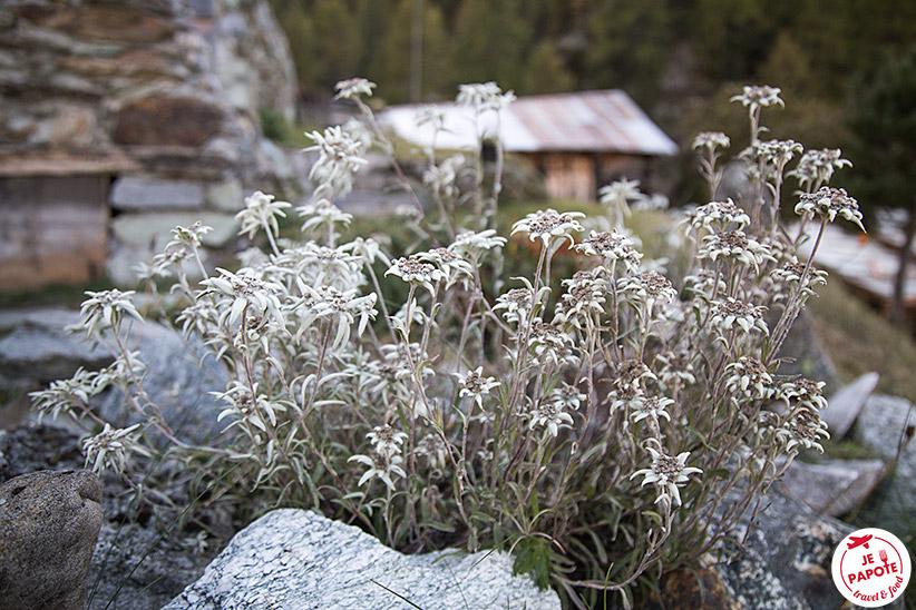 Fleurs Suisse Valais