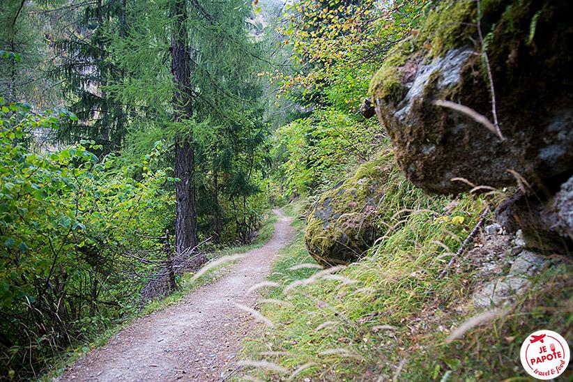 Forêt Valais Suisse