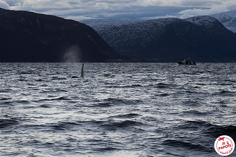 Norvège Orques