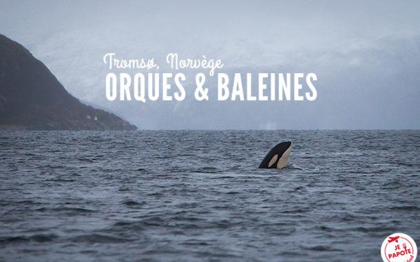 Voir les orques et les baleines en Norvège