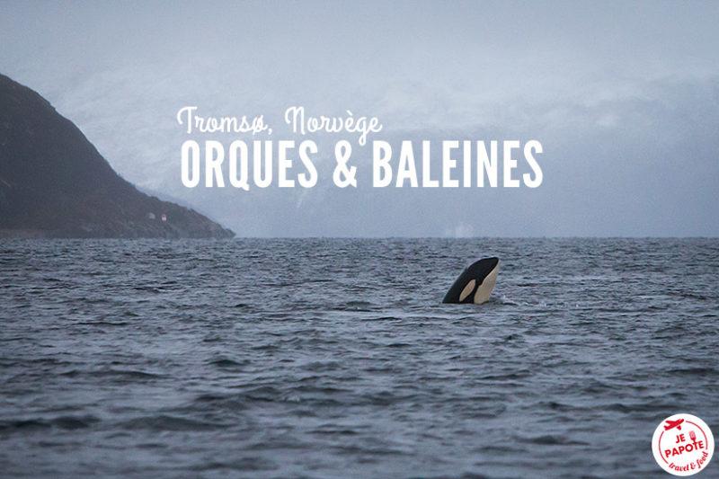Orques & Baleines Norvège