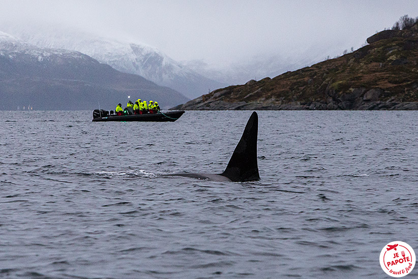 Sortie pour voir les orques