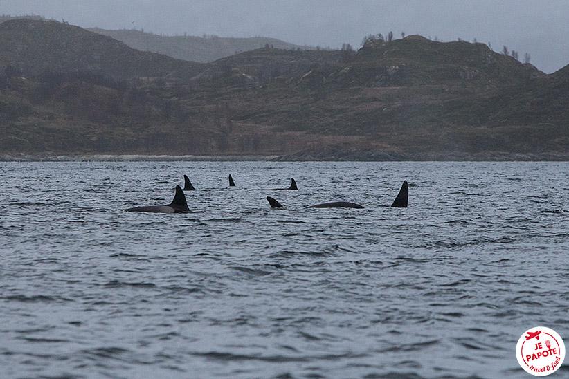 Voir orques Tromso