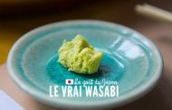 Découverte du Wasabi
