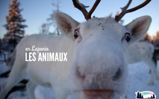 10 animaux à observer en Laponie