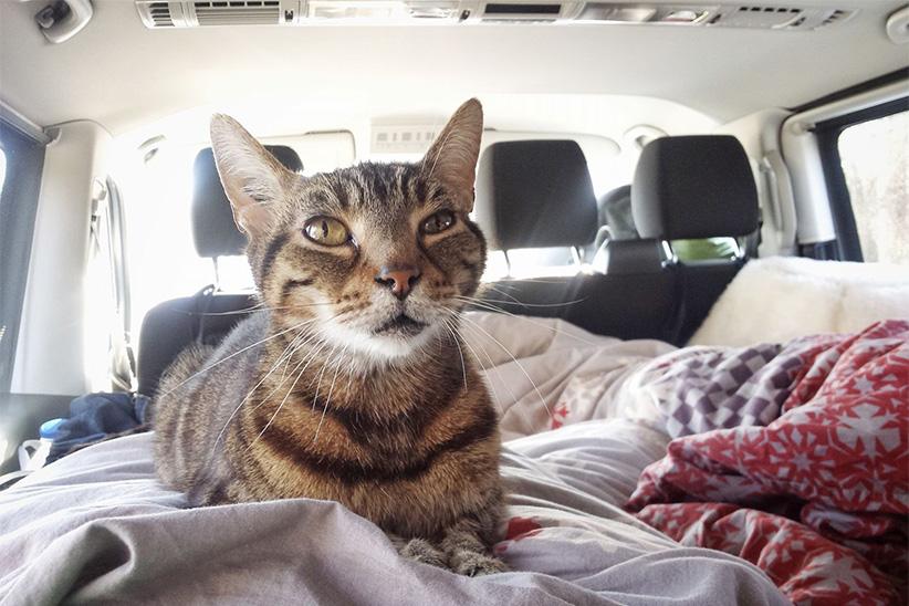 Chat trajet voiture