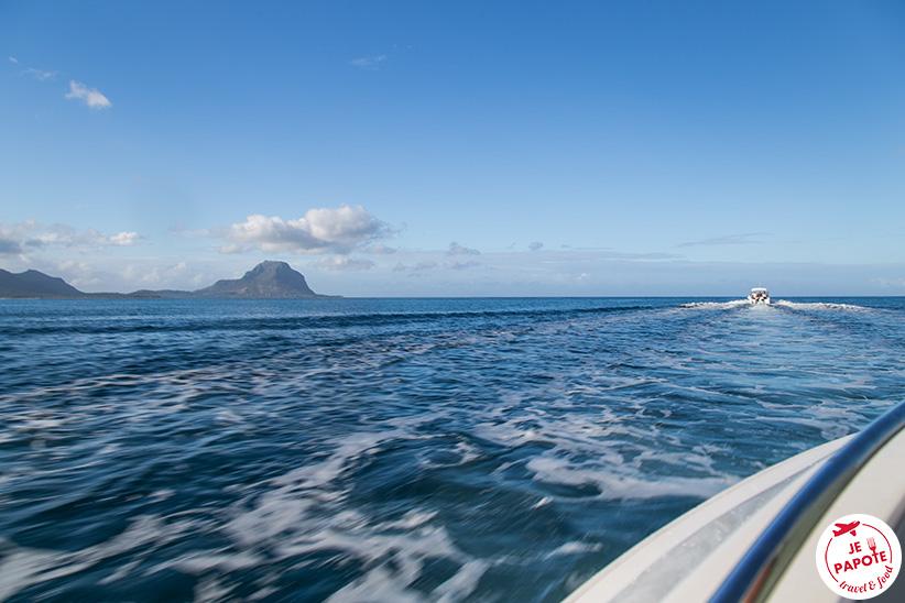 sortie dauphin Ile Maurice