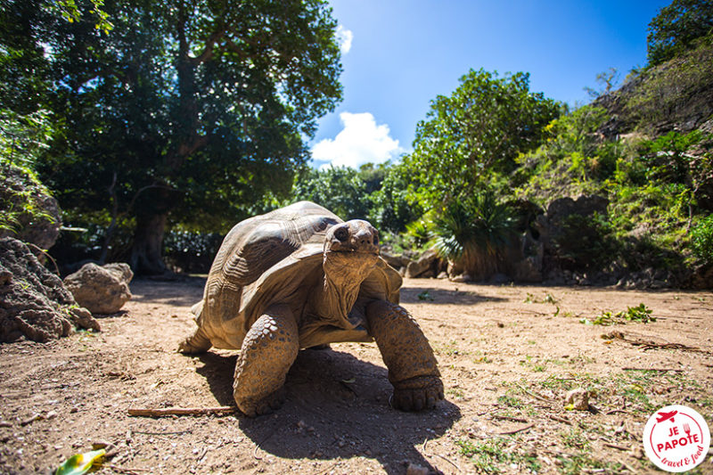 Parc tortues géantes Rodrigues