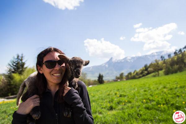 agneau champsaur