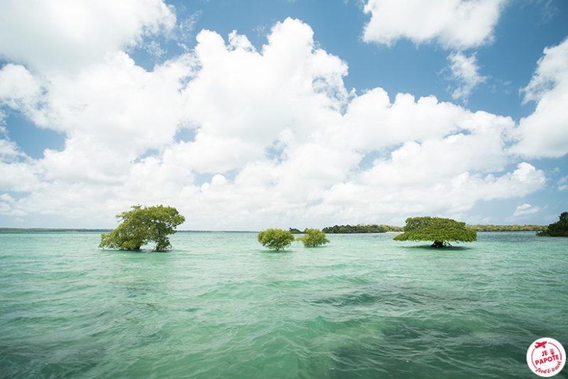 Mangrove Zanzibar