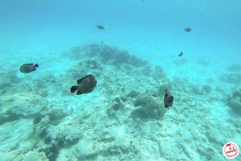 snorkeling mnenba