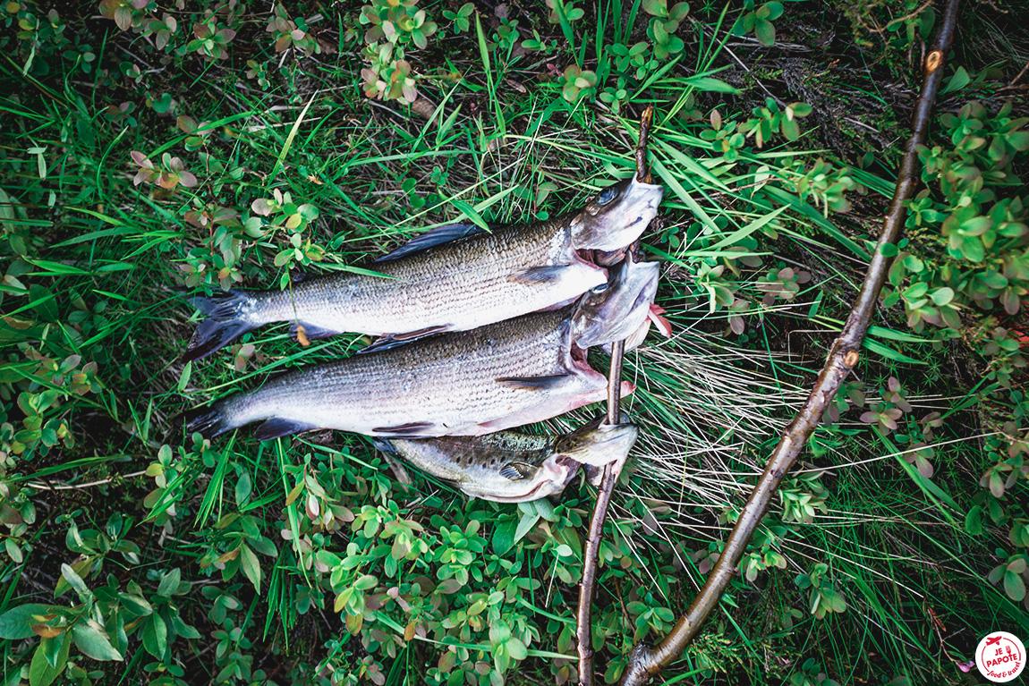 poisson laponie