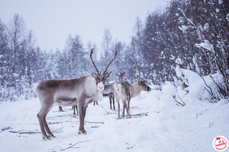ferme rennes rovaniemi