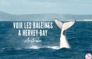 Hervey Bay : LE spot pour observer les baleines