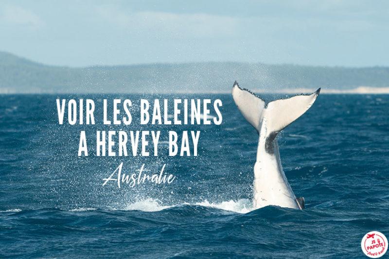 hervey bay baleine australie