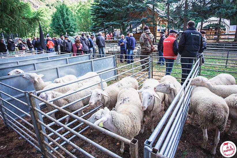 foire aux bestiaux la Chapelle en Valgaudemar
