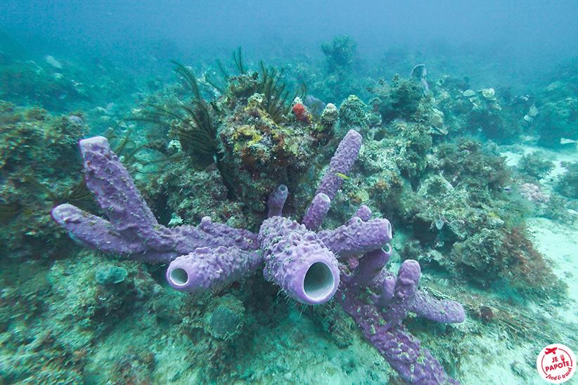flore et faune sous marine en martinique