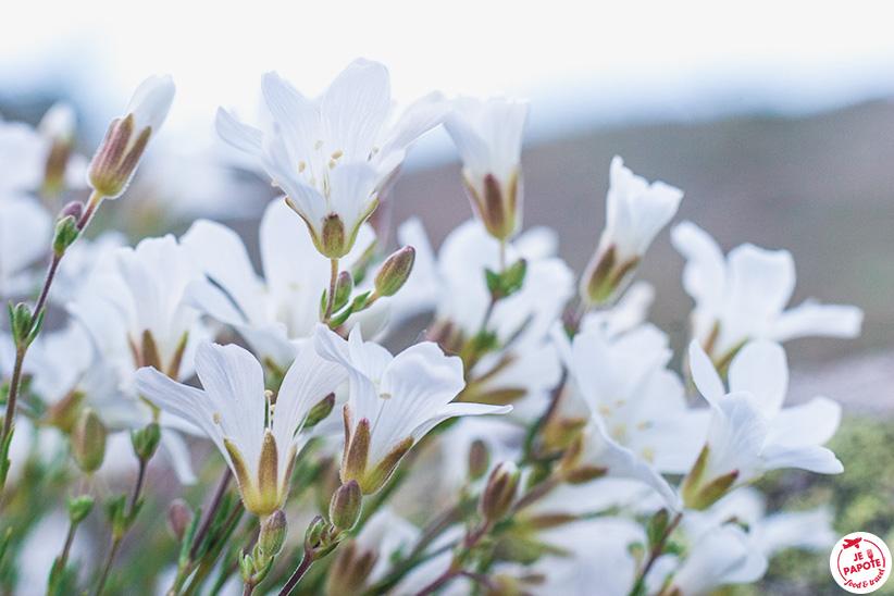 Fleurs dans le parc des écrins